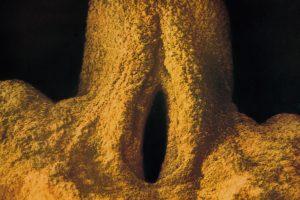 9weeks ext.genitals M&F